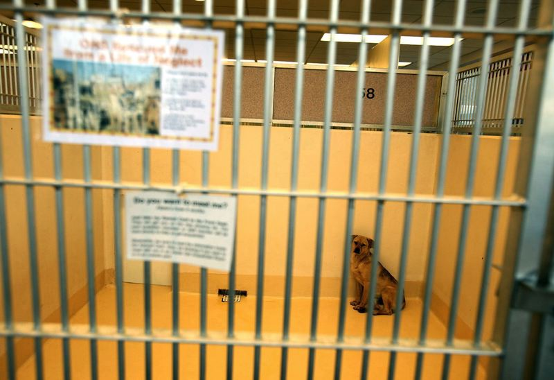 PAMPLIN MEDIA GROUP FILE PHOTO - Oregon State Police said in early August that its detectives are investigating some enforcement tactics used by the Oregon Humane Society.