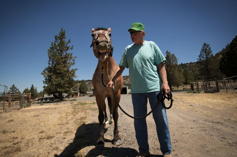PORTLAND TRIBUNE: JAIME VALDEZ - Major smiles for the camera while going on a walk with Larry Kanzler in Prineville. Larry and his wife, Cheryl, both retired from Portland Police Bureau, bought Major, a former member of the Mounted Patrol Patrol.