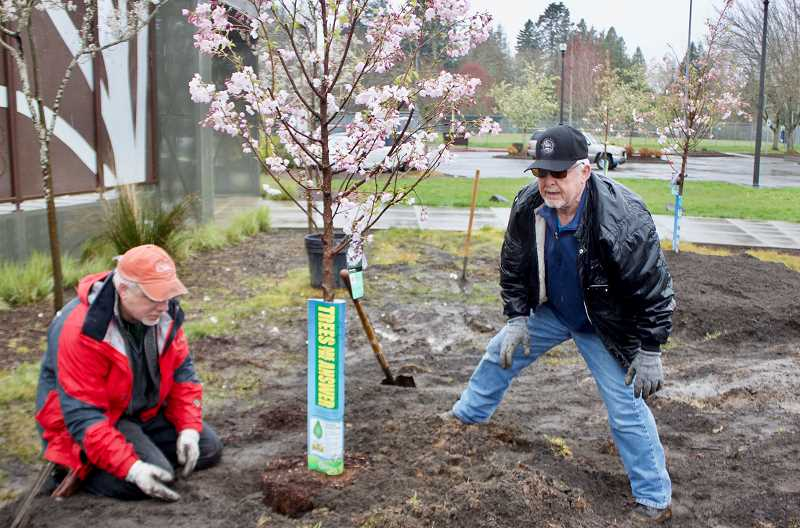 OUTLOOK FILE PHOTO  - Gresham Council President Kirk French helped plant the 12 Akebono cherry trees in Ebetsu Plaza during Arbor Day. The trees will flower every April.