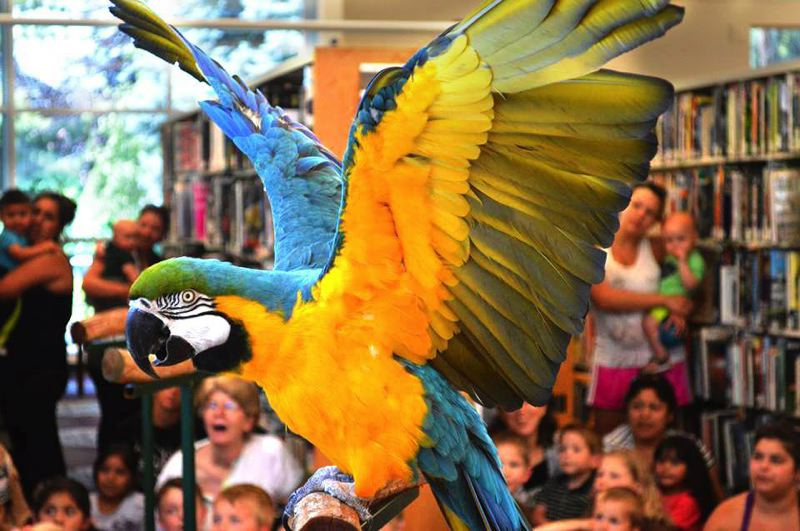 FILE PHOTO - Join members of the Exotic Bird Rescue of Oregon for a meet-and-greet with birds available for adoption. See listing for details.