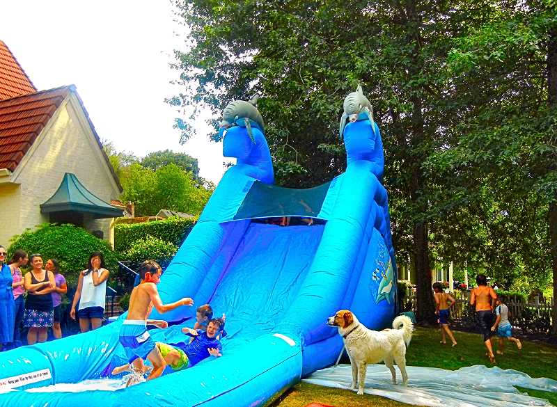 ELIZABETH USSHER GROFF - Dugout dog Clyde looks wistfully at the boys water slide action at the Eastmoreland home of the Kullbergs. Ryan Kullberg is coach of this years winning Sellwood Little League team.