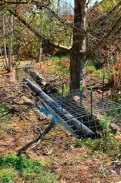 DAVID F. ASHTON - This is the newly-installed Beaver Deceiver along Errol Creek, which allows the critters to keep on building dams, while mitigating the flooding problems.