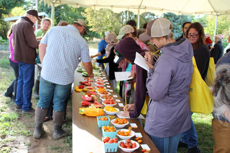 PHOTO BY KIMBERLY JACOBSEN NELSON  - Vegetable Variety Field Day participants rate harvested vegetable varieties for appearance, flavor, texture and overall satisfaction.