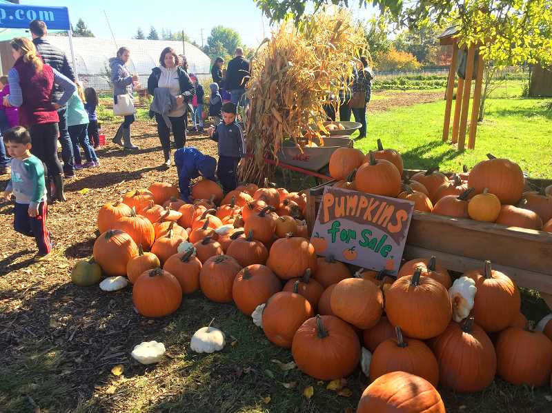 COURTESY PHOTO - CREST Fall Farm Festival returns to Wilsonville Oct. 6 with food and fun for the whole family.