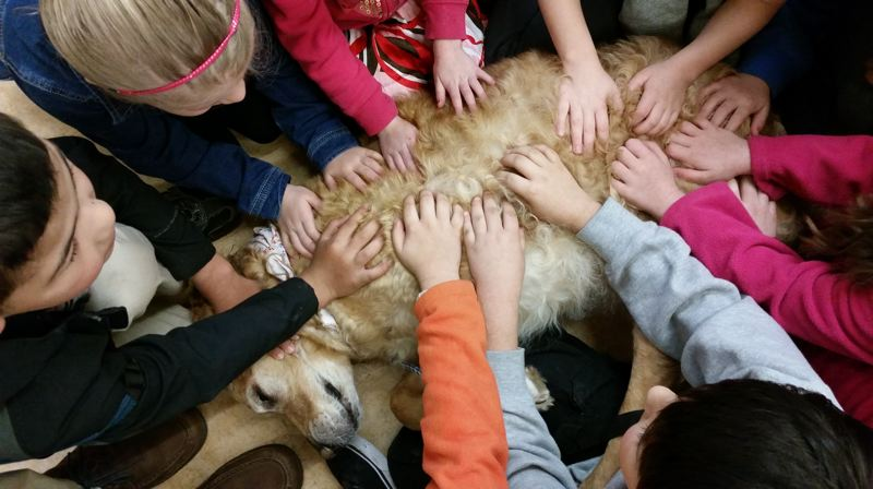 PHOTO COURTESY OF DAVID SPACKMAN - David Spackman's therapy dog, Teddy Bear, worked with students in the Vernonia School District for several years before the dog passed away. Students and staff helped fund-raise money to help Spackman purchase and train a new dog that would be able to be used at the school.