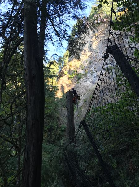 CONTRIBUTED PHOTO: U.S. FOREST SERVICE - Arborists removed hazard trees from the slopes around Multnomah Falls on Sept. 25.