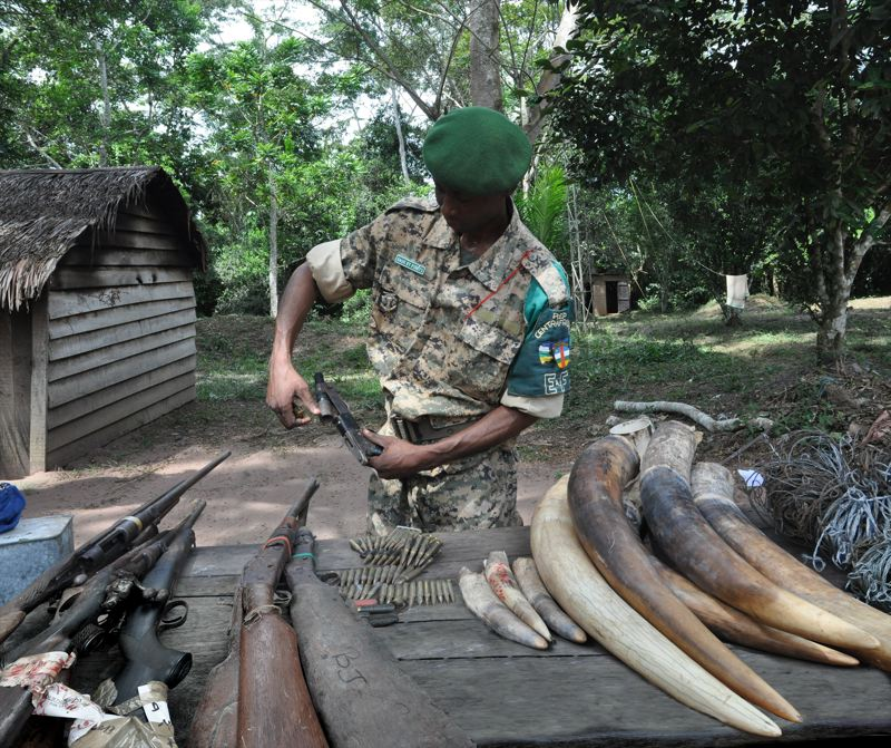 COURTESY: TODD MCGRAIN - It's up to a small band of people, including a Bantu eco-guard, to protect them the forest elephants.