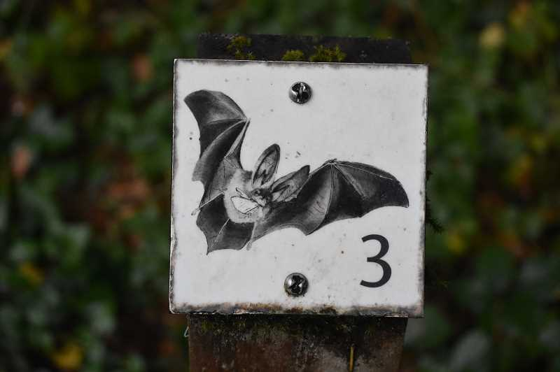ESTACADA NEWS PHOTO: EMILY LINDSTRAND - The bat trail at Milo McIver features several images of the creatures.