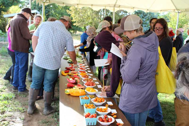 PHOTO: CREDIT KIMBERLY JACOBSEN NELSON  - Vegetable Variety Field Day participants rate harvested vegetable varieties for appearance, flavor, texture and overall satisfaction.