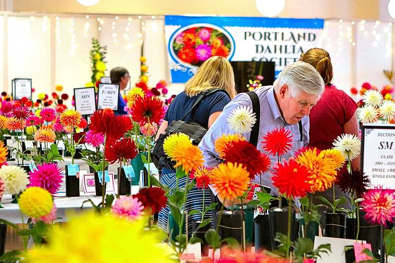 DAVID F. ASHTON - Judges spread out to inspect and award the multitude of dahlias on display at the 90th annual North Willamette Region Dahlia Show at Oaks Amusement Park on August 25th.