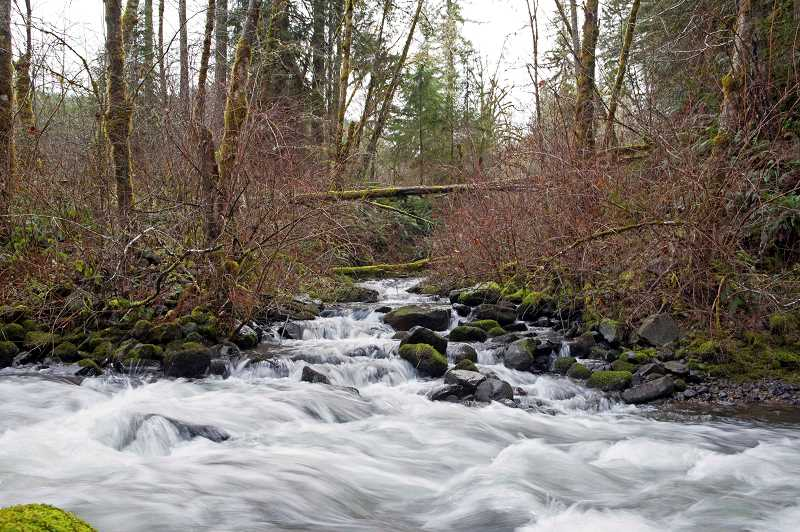 CONTRIBUTED PHOTO: DAVID BUGNI - Suter Creek is pictured at its confluence of the north fork of Eagle Creek. Both creeks run through the property that will become the Eagle Creek Community Forest.