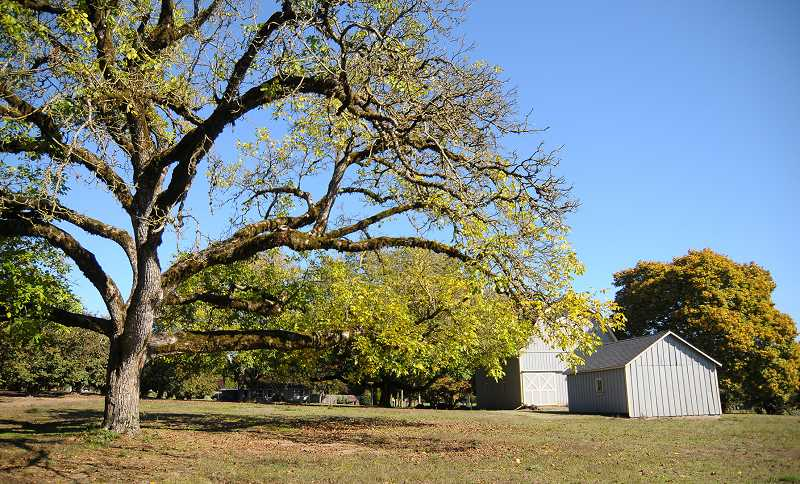 SETH GORDON - The former Sander Estate held a prune, hazelnut and berry nursery business from the 1900s to the 1970s and is still an active orchard today.