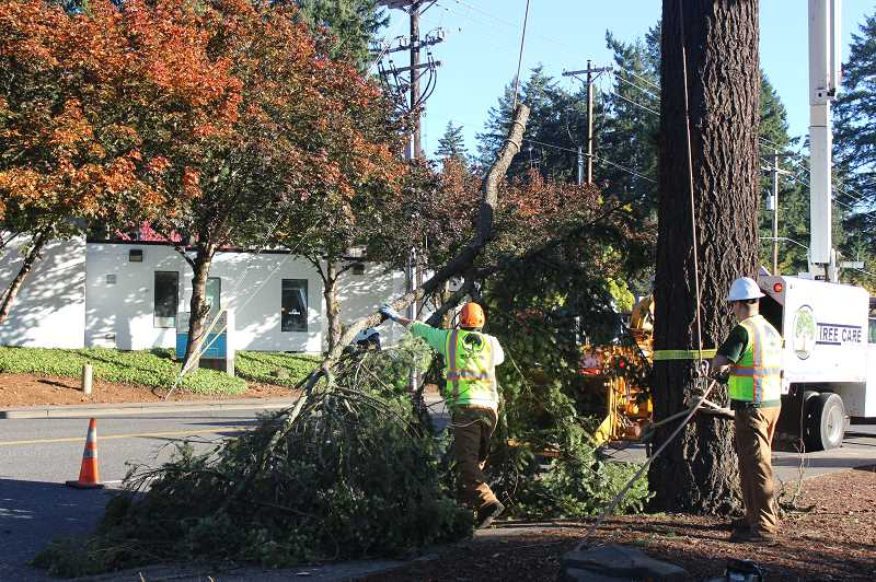 REVIEW PHOTO: COREY BUCHANAN - Tree Care Unlimited removed a Douglas fir tree along Boones Ferry Road on Oct. 11 as part of a project to create a bench made out of the tree.