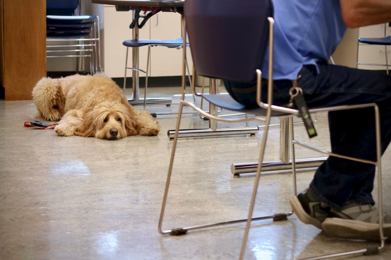 COURTESY: JOSHUA PURVIS - An entrepreneur's dog at the Oregon Coast Startup Weekend organized by Oregon RAIN, which helps rural startups and connects them to mentors and funding sources.