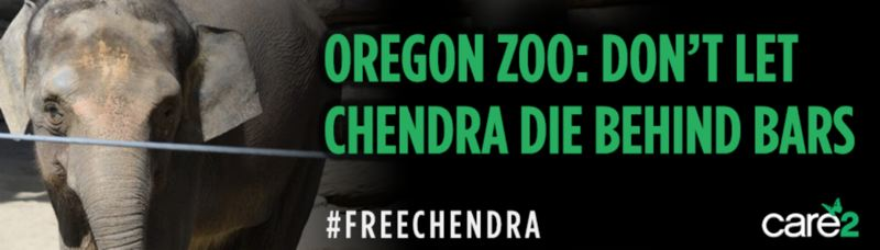 COURTESY CARE2 - Care2 paid to put up this billboard critizing the Oregon Zoo in two places in the Beaverton area.