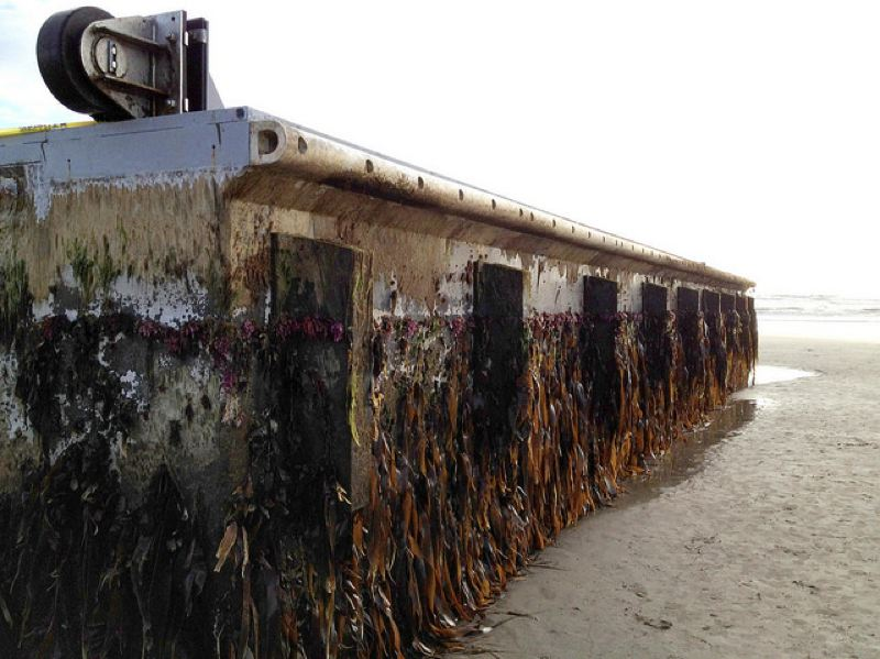 COURTESY PHOTO: OSU - A concrete dock that washed ashore near Newport in June 2012 had invasive species of algae that could have taken root on the coast if not for the work of state officials, according to a report by Oregon State University and Japanese researchers.