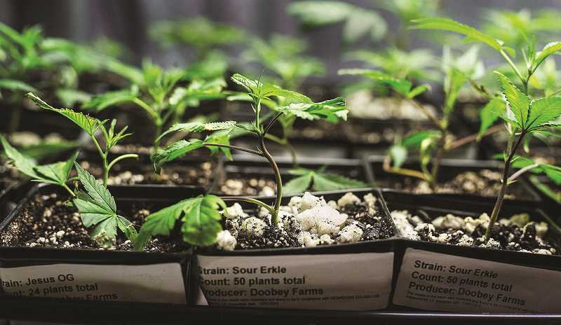 PMG FILE PHOTO - The Newberg City Council approved extending hours of operations for retail and medical marijuana dispensaries in the city at its Oct. 15 meeting.