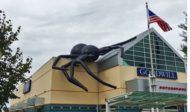 CONTRIBUTED PHOTO: GOODWILL INDUSTRIES OF THE COLUMBIA WILLAMETTE - Different cities around the region allow Goodwill stores to display its Halloween spider. This one can be seen in Newberg.