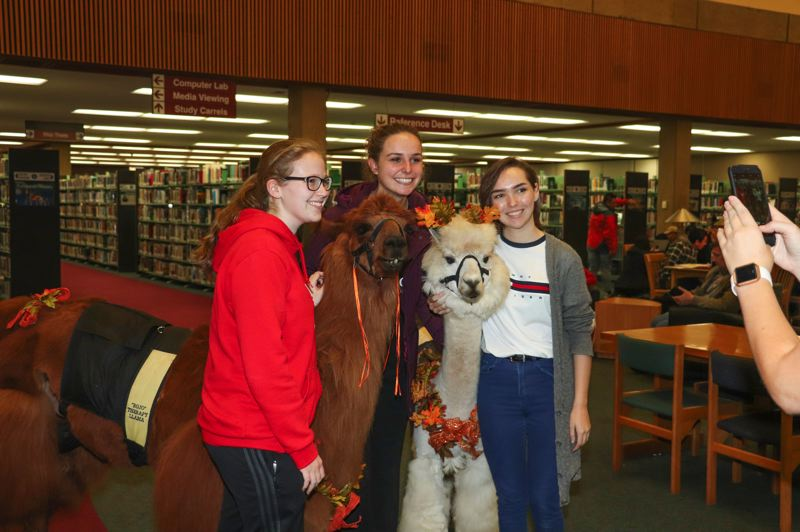 CONTRIBUTED PHOTO: MT. HOOD COMMUNITY COLLEGE - Some Mt. Hood Community College students take a break with Rojo the Llama and Napoleon the Alpaca.