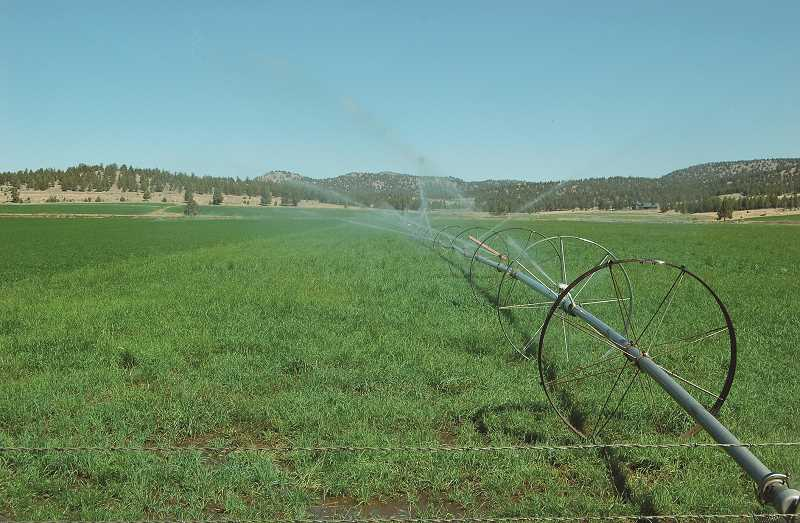 CENTRAL OREGONIAN FILE PHOTO - With hotter temperatures this growing season, more irrigation water was needed to produce crops.