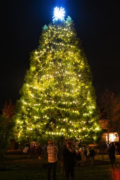 STAFF PHOTO: CHRISTOPHER OERTELL - The Banks Christmas tree lit up last year.
