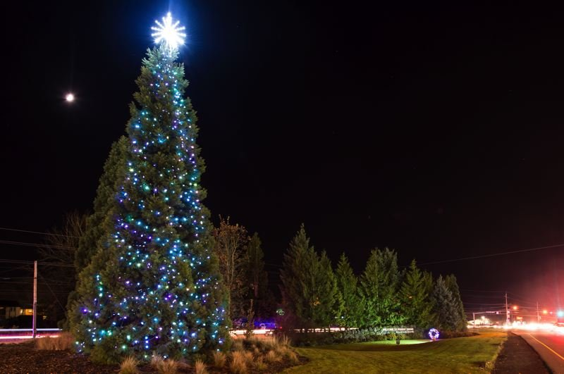 STAFF PHOTO: CHRISTOPHER OERTELL - Last year's Forest Grove holiday tree overlooks Highway 8. This year's tree-lighting ceremony moves to the Forest Grove Senior & Community Center, closer to downtown.