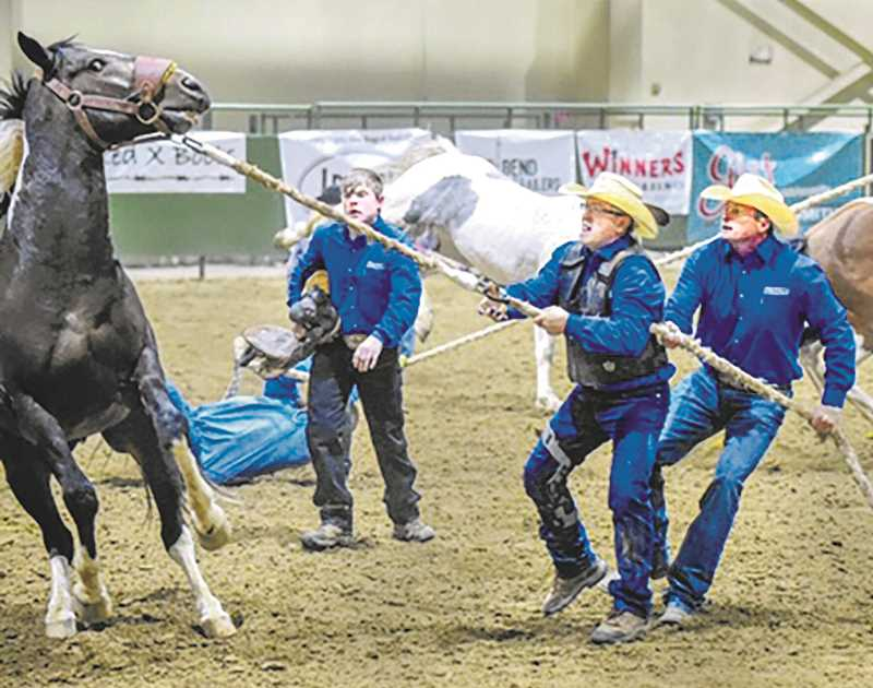 SUBMITTED PHOTO - photo courtesy of david gregory