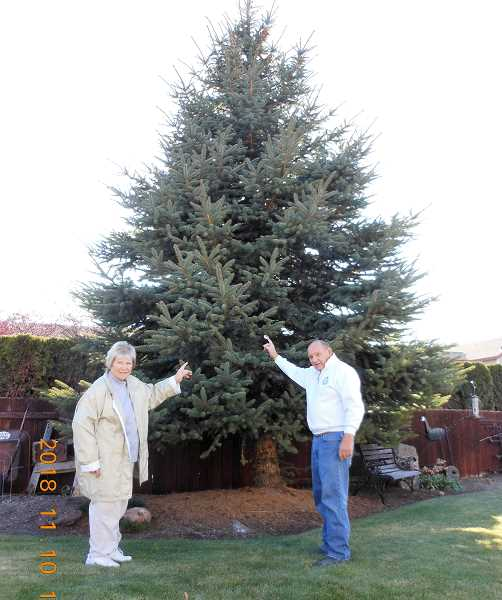 Madras provides Redmond Christmas tree