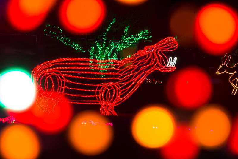 SUBMITTED PHOTO: MICHAEL DURHAM, OREGON ZOO. - More than 1.6 million brightly colored lights transform the Oregon Zoo into a walk-through winter wonderland during ZooLights.