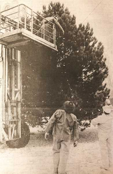 CENTRAL OREGONIAN FILE PHOTO  - Dec. 2, 1993: The Crook County Parks and Recreation District has been busy the past week, hanging Christmas lights on a tree in front of the county courthouse and hanging banners along the city's streets.