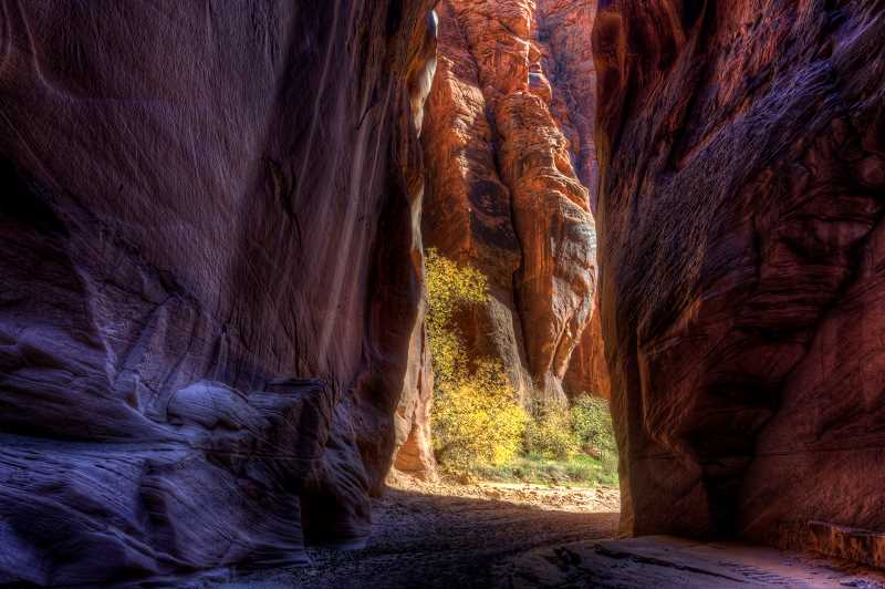 LON AUSTIN/CENTRAL OREGONIAN - Although most of Buckskin Gulch is narrow, often so narrow that you can touch both sides at the same time, the canyon occasionally opens up allowing for both vegetation and sunshine.