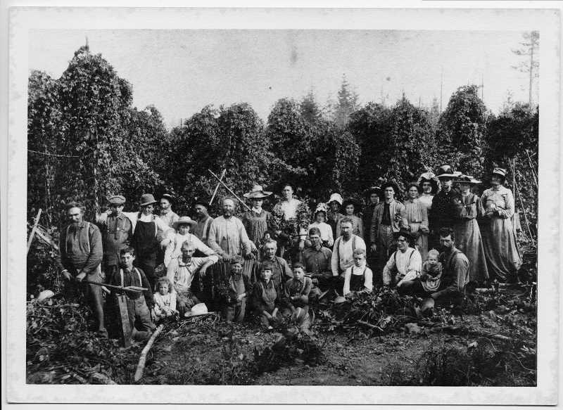 PHOTO COURTESY OF THE LAKE OSWEGO PUBLIC LIBRARY - Hops were just one of the crops that Charles Wesley Bryant grew on his 1850s homestead, which ran from what is now South Shore Boulevard along the main Oswego canal south to the Tualatin River.