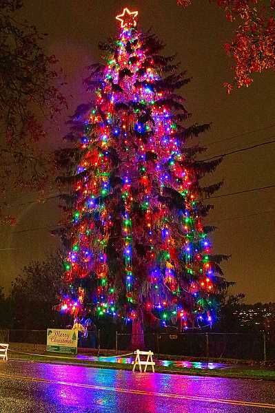 DAVID F. ASHTON - This was the moment, at 6 p.m. on November 23 - the official lighting of this years Sellwood-Westmoreland Christmas Tree on the Bybee Curve over Oaks Bottom.