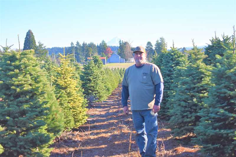 ESTACADA NEWS PHOTO: EMILY LINDSTRAND - Cory Miller of Deep Creek Tree Farms stands between rows of trees at his Eagle Creek Farm.