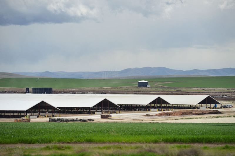 COURTESY PHOTO: EO MEDIA GROUP FILE - The Lost Valley Dairy outside Boardman, has sparked legislative discussions about how large dairies are regulated in Oregon.