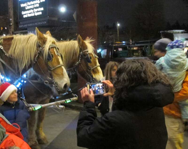 PHOTOS BY BILL GALLAGHER -  Barry, right, and Dan, left, two Belgian draft horses from Sweet Home, pose for photos with bundled-up  Holiday Gala attendees in front of the Multnomah Arts Center.  It was 38 degrees as Barry (18) and Dan (13) pulled one of two lighted carriages that provided rides for 25 people at a time for three hours.