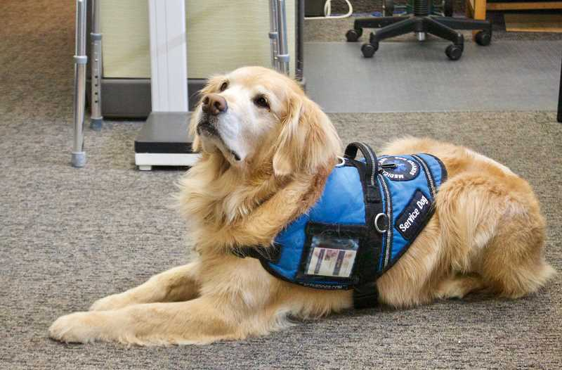 OUTLOOK PHOTO: CHRISTOPHER KEIZUR - When Akina puts on her service vest, she becomes all business helping visitors to the clinic.