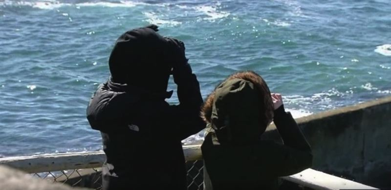 KOIN 6 NEWS IMAGE - Whale watchers on the Oregon Coast in March.