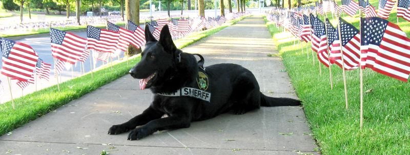 CONTRIBUTED PHOTO: MULTNOMAH COUNTY SHERIFFS OFFICE  - Multnomah County Sherriffs Office K-9 Varro served as a police dog for nine years. The dog retired from police work in 2014.