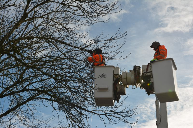 SPOTLIGHT PHOTO: COURTNEY VAUGHN - St. Helens public works employees Scott Harrington and Ethan Sterling took to the trees in a bucket truck Wednesday, Jan. 2, to remove Christmas ball decorations and other lights from the Columbia Courthouse Plaza. The removal of the holiday decorations signaled a fresh start to 2019.