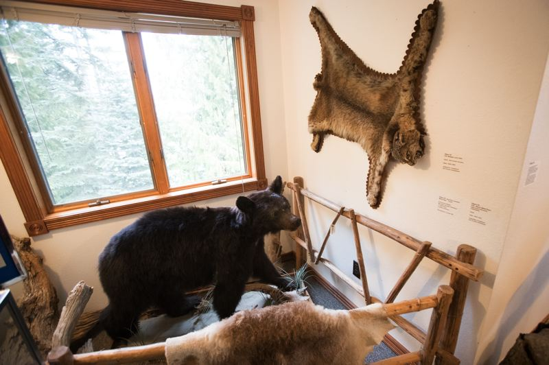 PAMPLIN MEDIA GROUP: JAIME VALDEZ - Lucy, a stuffed black bear, is one of the star attractions at the Mt. Hood Cultural Center and Museum, which is slated to undergo a three-phase expansion over the next 10 years.