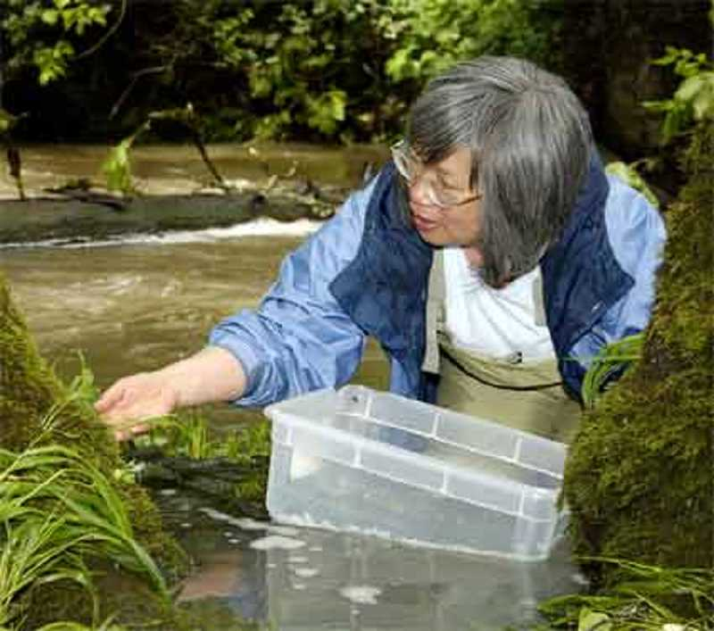 SUBMITTED PHOTO  - Dr. Judy Li, retired associate professor at Oregon State Universitys Department of Fisheries and Wildlife, will deliver the first quarterly Nature Talk lecture Jan. 31. It is free and open to all.