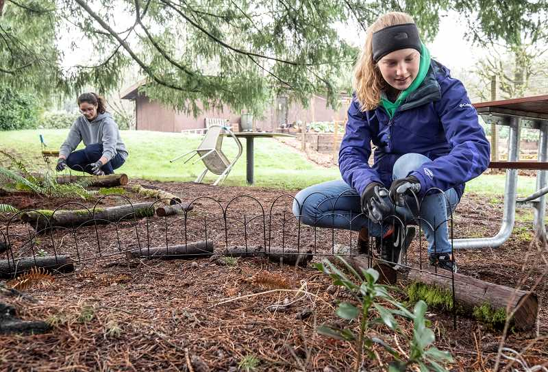 TIDINGS PHOTO: JONATHAN HOUSE - Claire James, right, and Sanjana Basak help install protective garden fencing at Robinwood Station for MLK Day.