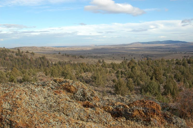 PAMPLIN MEDIA GROUP FILE PHOTO - An effort to make basin wildrye the official state grass draws on its importance to Eastern Oregon's rangelands, and the possible lessons it could provide in what has been an 'overlooked' area.
