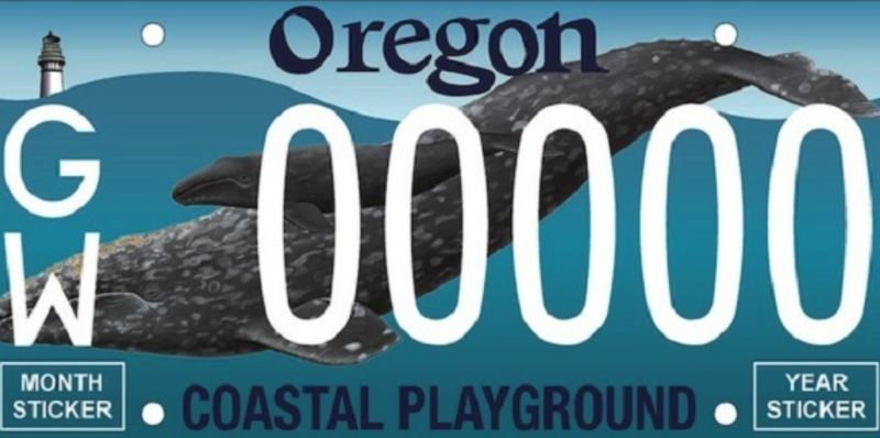 VIA KOIN 6 NEWS - Oregon will get a new license plate in 2019 featuring a grey whale.