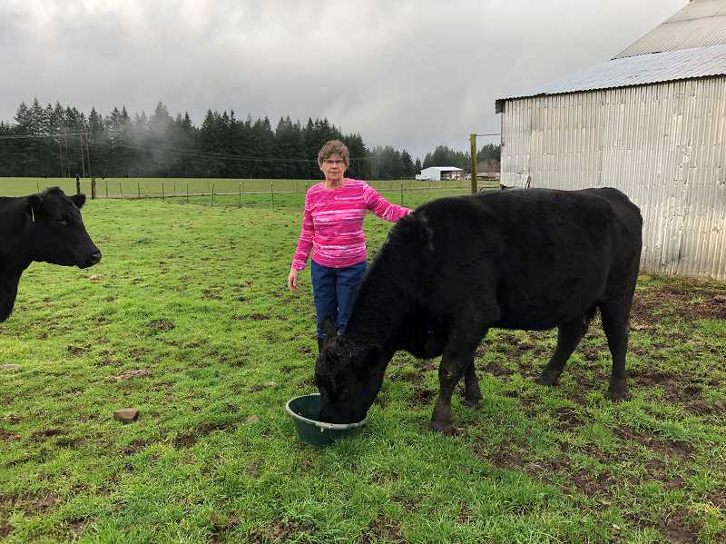 CONTRIBUTED PHOTO - Raeline Kammeyer works with cattle on her farm on Springwater Road. Kammeyer was recently named the Oregon Fairs Association Fair Board Member of the Year.