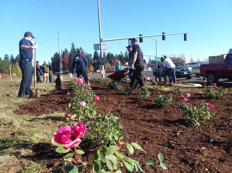Volunteers enjoy a sunny Saturday while planting colorful flowers along Hwy. 99E in Canby.