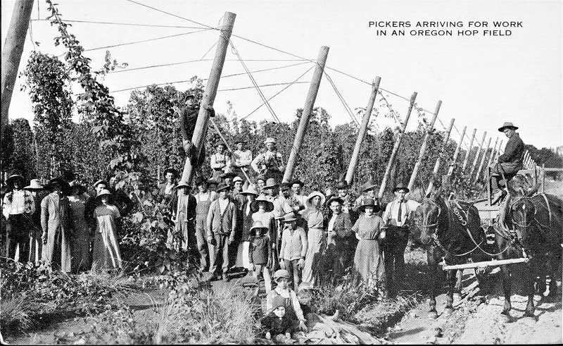 COURTESY PHOTO: WASHINGTON COUNTY LIBRARY - Hop picking is a historical industry in Washington County, with pickers pictured in Hillsboro in 'Images of America: Washington County.'