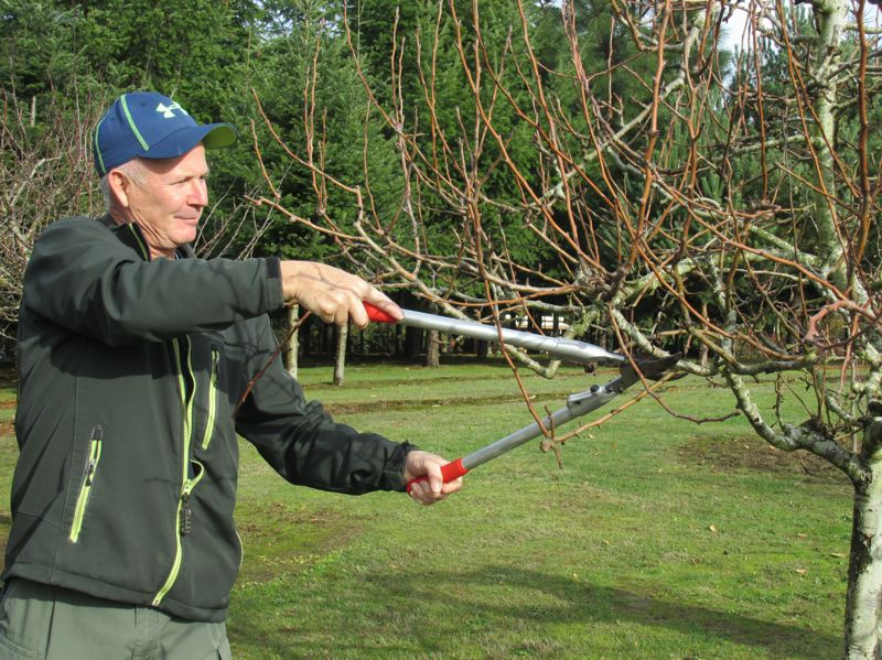 SUBMITTED PHOTO - Mitch Radamacher enjoys helping his neighbor with fruit-tree pruning in Clackamas County.
