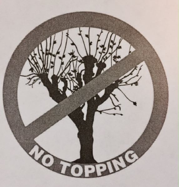 COURTESY OF CYNTHIA ORLANDO  - Tree-topping is the indiscriminate cutting back of branches to stubs. Don't do it.